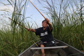 Tania Aubid harvests wild rice in Northern Minnesota. Enbridge Sandpiper and Line 3 pipelines threaten the the Sandy Lake and Rice Lake watersheds, a mother lode of wild rice in Minnesota. Wild rice is considered sacred and it requires clean water for survival. Photo by Keri Pickett.
